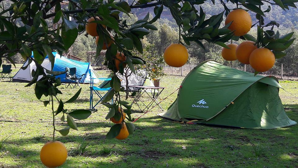 Caretta Camp 2 1