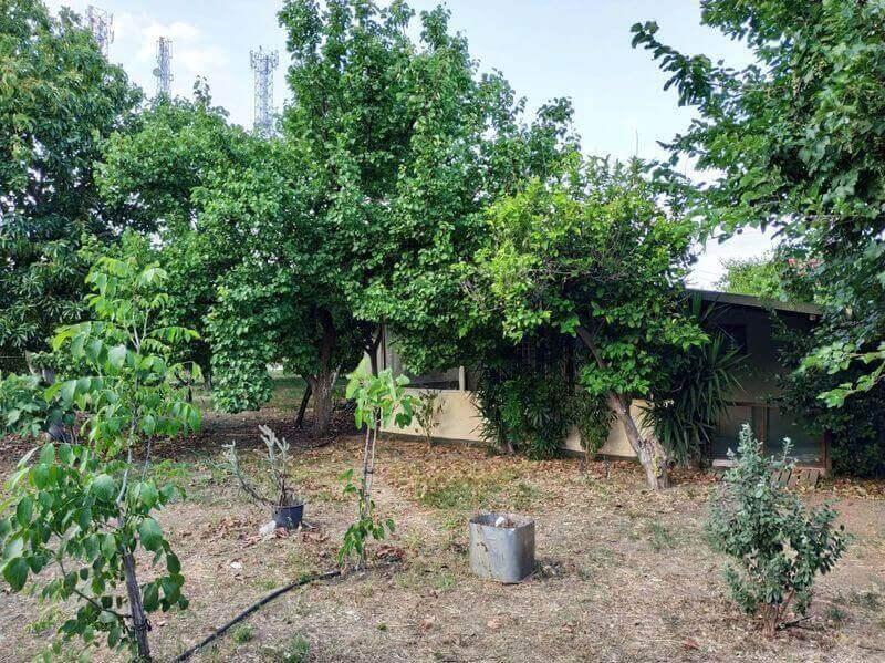 Kemer Kamp Alanları - Çekirdeksiz Mandalin Camping