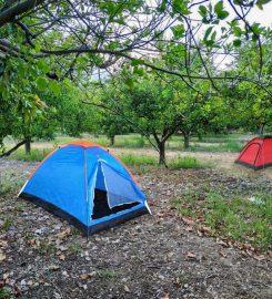 Çekirdeksiz Mandalin Camping
