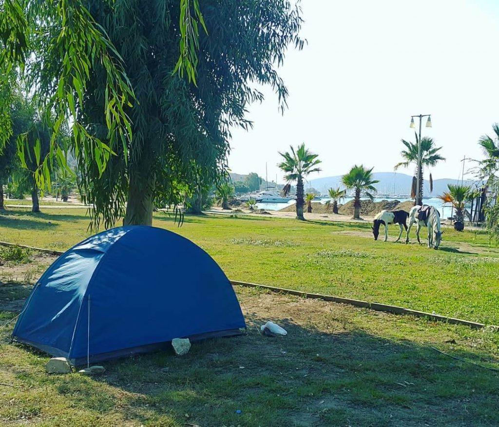 Zetas Camping 2