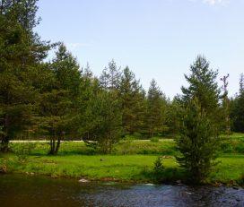 Sarıalan Yaylası Kamp Alanı