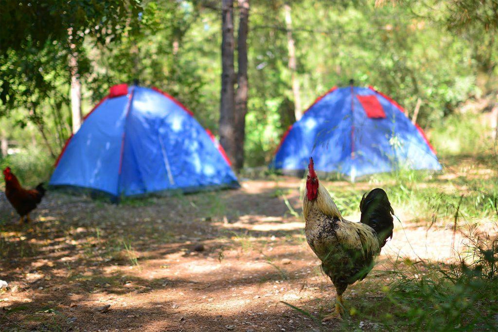 Yerdeniz Kamp 1