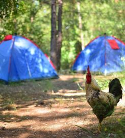 Yerdeniz Kamp