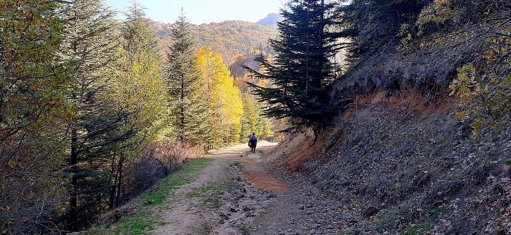 Erkmen Tabiat Parkı Kamp Alanı