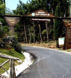 Amasya Kent Ormanı Kamp Alanı