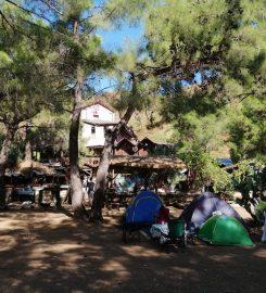 Jungle Bungalows & Camping