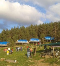 Kamp Bozayı