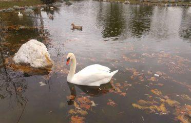 Yedikuğular Kuş Cenneti Kamp Alanı