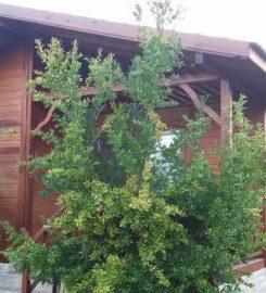 Granate Garden